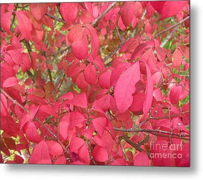 Red Leaves IIi Metal Print by Alys Caviness-Gober