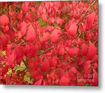 Red Leaves Iv Metal Print by Alys Caviness-Gober