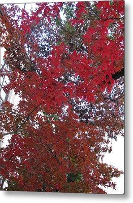 Red Leaves Of Windsor Metal Print by Shawn Hughes