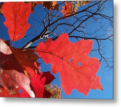 Red On Blue Metal Print