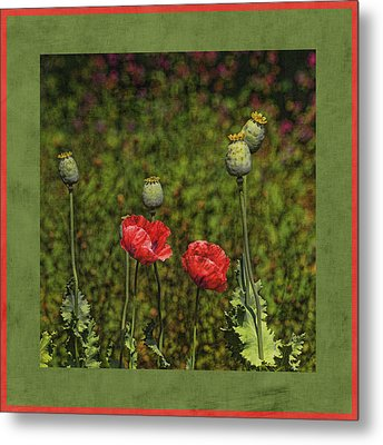 Red Poppies Metal Print by Bonnie Bruno