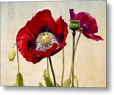 Red Poppies Metal Print by Marion McCristall