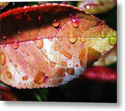 Red Rain Metal Print by Todd Sherlock