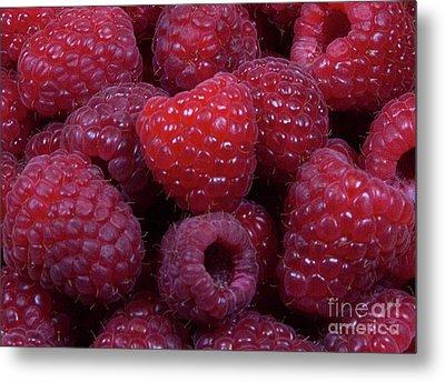 Red Raspberries Metal Print by Michael Waters