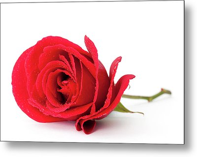 Red Rose Metal Print by Andrew Dernie
