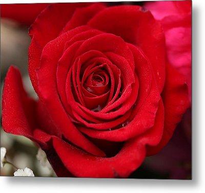 Red Rose Of Love II Metal Print by Sheila Kay McIntyre