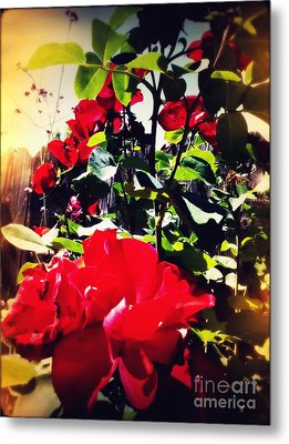Metal Print featuring the photograph Red Roses by Leslie Hunziker