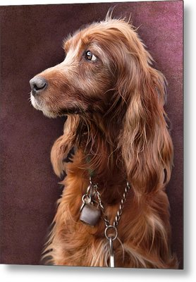 Metal Print featuring the photograph Red Setter Dog Portrait by Ethiriel  Photography