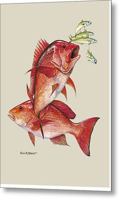 Red Snapper Metal Print by Kevin Brant