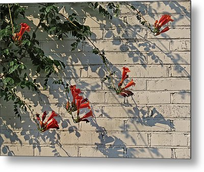 Metal Print featuring the photograph Red Summer Trumpets by Deborah Smith