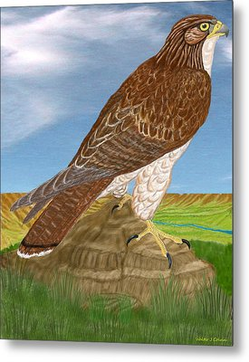 Metal Print featuring the digital art Red Tail Hawk by Walter Colvin