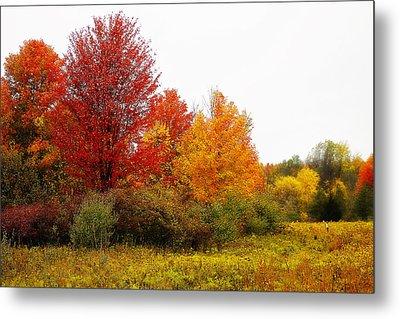 Red Tree Metal Print by Scott Hovind