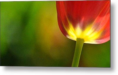 Red Tulip 2 Metal Print by Ronda Broatch