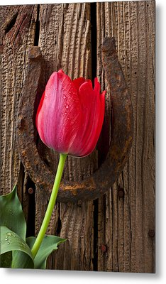 Red Tulip And Horseshoe  Metal Print by Garry Gay