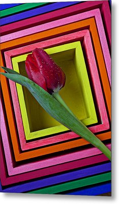 Red Tulip In Box Metal Print by Garry Gay
