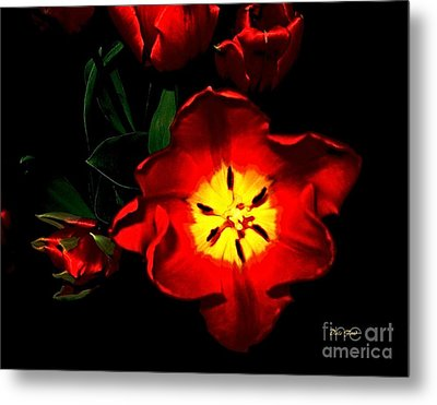 Red Tulips Metal Print by Dale   Ford