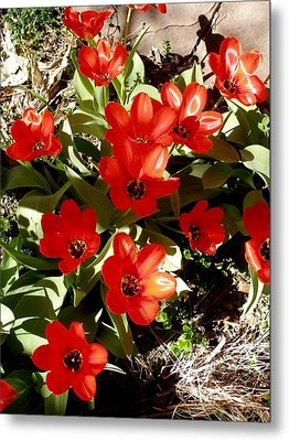 Metal Print featuring the photograph Red Tulips by David Pantuso