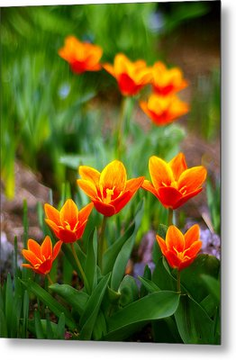 Red Tulips Metal Print by Paul Ge