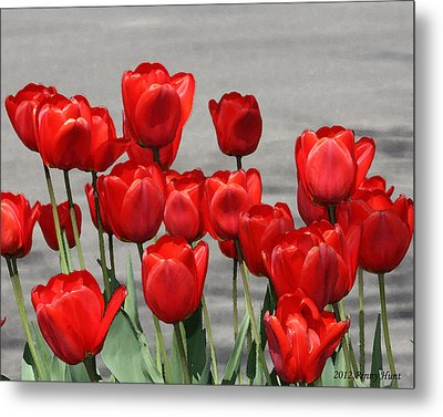 Metal Print featuring the photograph Red Tulips Welcome Spring by Penny Hunt