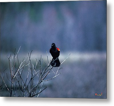 Red-wings Morning Call 10o Metal Print by Gerry Gantt