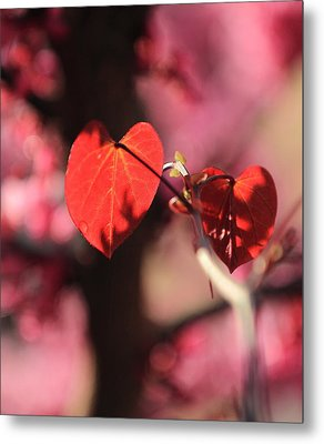 Metal Print featuring the photograph Redbud In Spring by Scott Rackers
