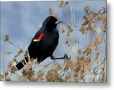 Redwing Blackbird Metal Print