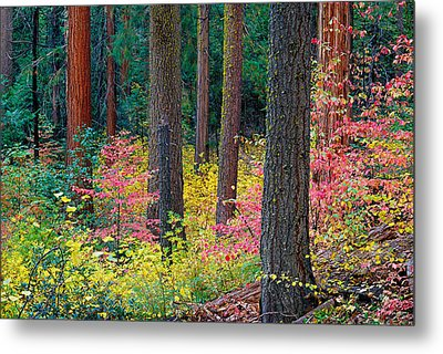Redwoods And Dogwoods Metal Print by Tim Fleming