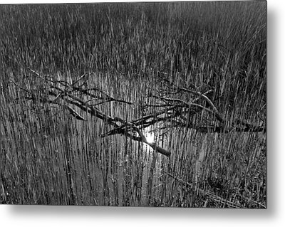 Reeds And Tree Branches Metal Print by David Pyatt