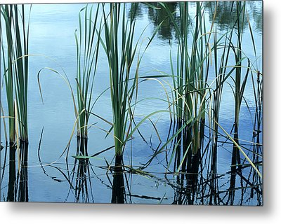 Reeds In The Water Metal Print