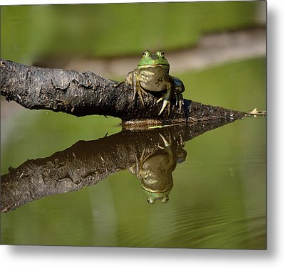 Reflecktafrog Metal Print