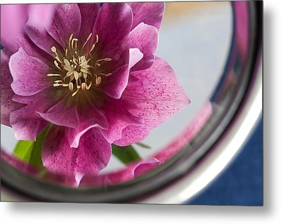 Metal Print featuring the photograph Reflected Beauty by Shirley Mitchell