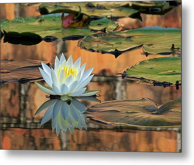 Metal Print featuring the photograph Reflecting Pond by Deborah Smith