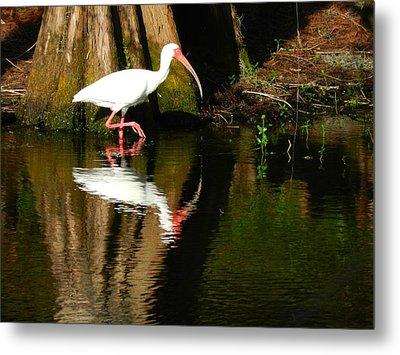 Reflection Metal Print by Don L Williams