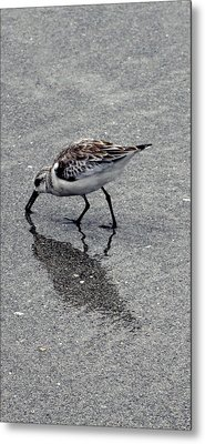Reflection Of A Lonely Bird Metal Print