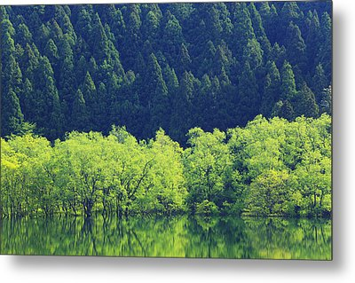 Reflection Of Forest On Water Metal Print