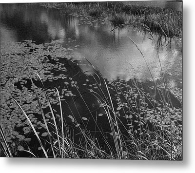 Metal Print featuring the photograph Reflections In The Pond by Kathleen Grace