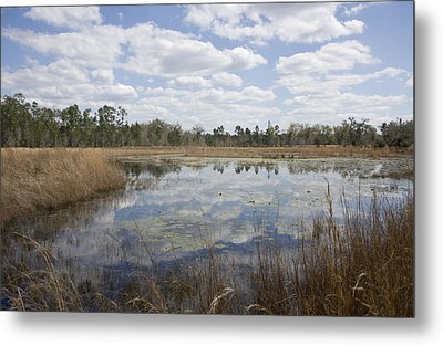 Reflections Metal Print by Lynn Palmer