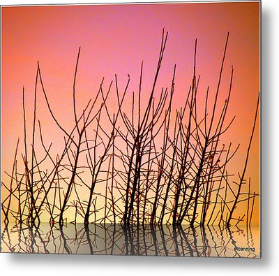 Reflects In Nature Metal Print by Michael Canning