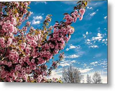 Refreshing Metal Print by Robert Bales