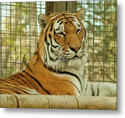 Regal Pose Metal Print by Margaret Buchanan