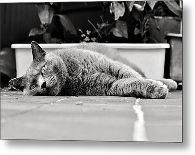 Relax Metal Print by Laura Melis