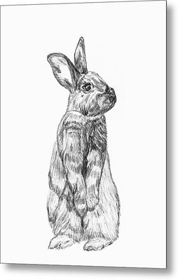 Metal Print featuring the drawing Rescued Rabbit by Katherine Dohnalek