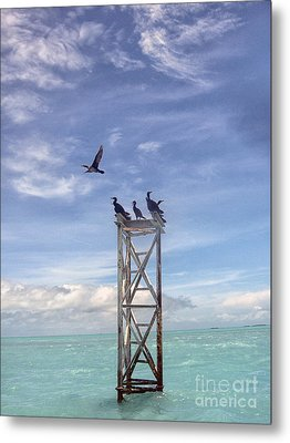 Revised Image Of Birds On Wooden Stand In The Ocean Off Key West Metal Print by Christopher Purcell