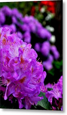 Metal Print featuring the photograph Rhododendron  by Puzzles Shum
