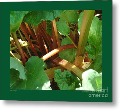 Metal Print featuring the photograph Rhubarb-i by Patricia Overmoyer