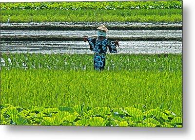 Rice Field - Okinawa Metal Print by Jocelyn Kahawai