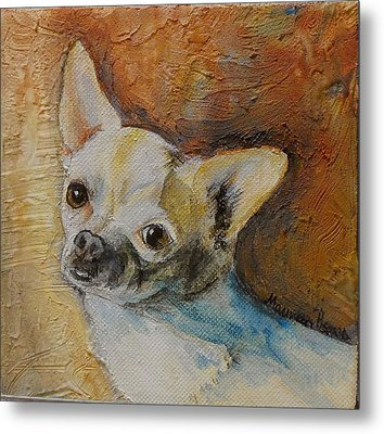 Rico Blue Chihuahua Metal Print by Maureen Pisano