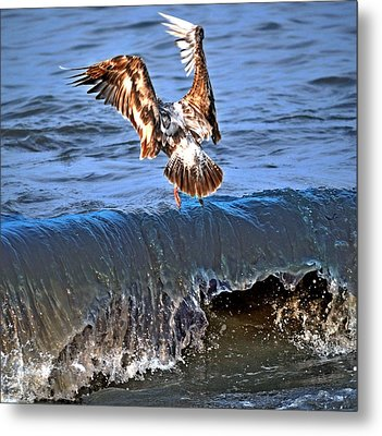 Riding The Wave  Metal Print by Debra  Miller