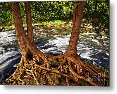 River And Roots Metal Print