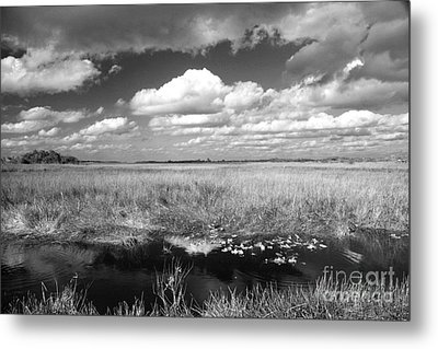 Metal Print featuring the photograph River Of Grass - The Everglades by Myrna Bradshaw